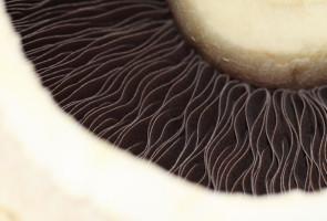 come si riconoscono i funghi